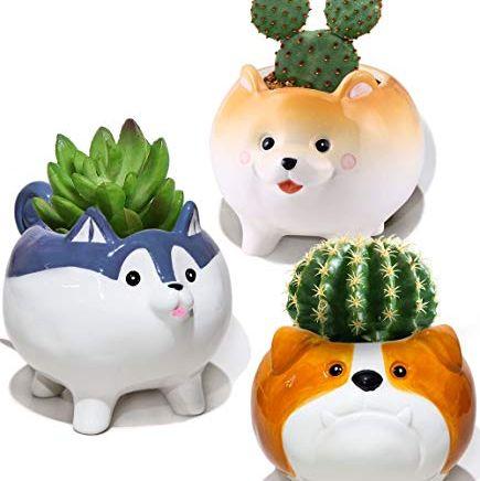 Dog Succulent Planters