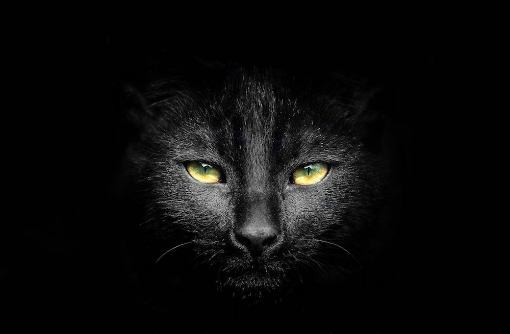 Are you looking for why are Black cats associated with Halloween?