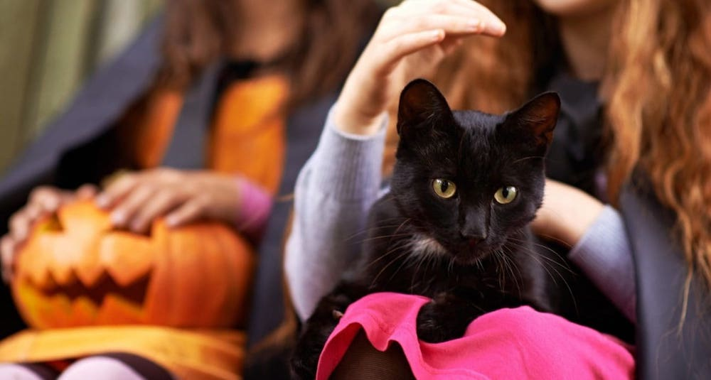 Do you know why are Black cats associated with Halloween