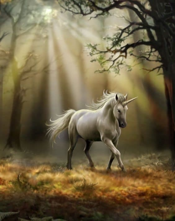 Ruva-types of unicorn you should know