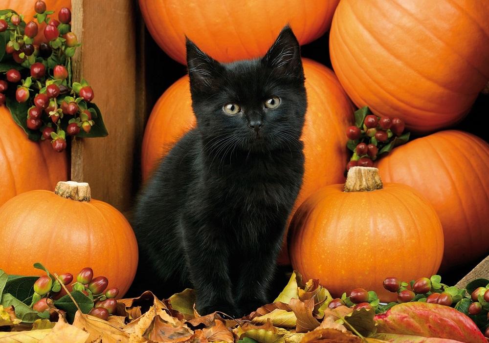 Are Black Cats In Danger Around Halloween?