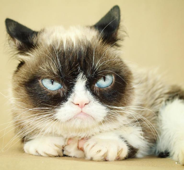 Official Grumpy Cat Store Merchandise