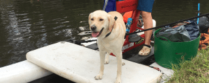 daisy the guide dog on a waterbike