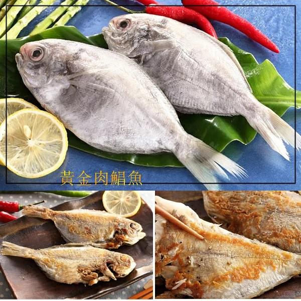 【海之醇】黃金肉鯧魚-2尾