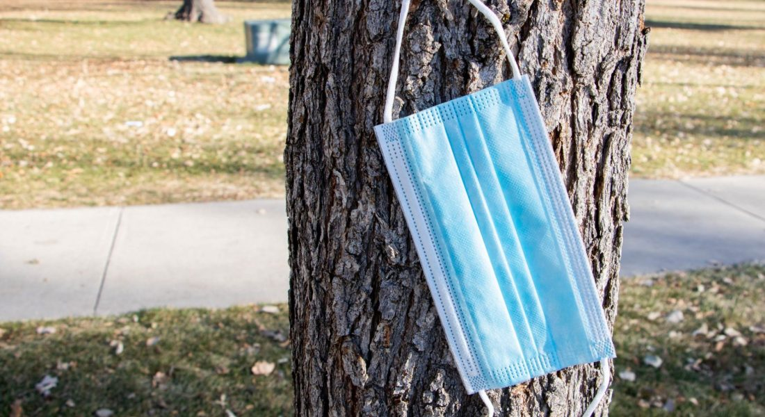 A blue disposable mask hangs from the branch of a tree.