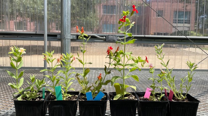 Plants growing in pots are lined up in rows.