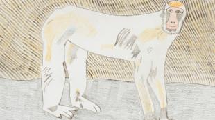 Barbary-Ape,-Neville-Jermyn,-2014