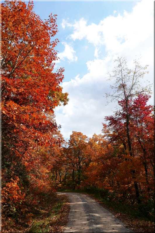 Virginia Fall Colors 1
