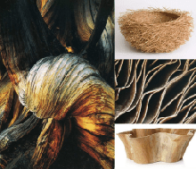 wood and roots