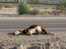 Αστυνομικός σε διαθεσιμότητα γιατί σκότωσε αγελάδα!!!