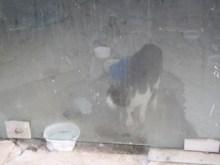 ΧΑΛΚΙΔΑ: Ανησυχία για το φυλακισμένο γατάκι…