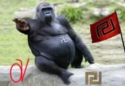 Μεγάλη επιστημονική ανακάλυψη — Βρέθηκε ο εθνικιστής γορίλας Aki Leu της φυλής Agamitsu στο Κογκό!!!