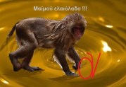 Οι Αμερικάνικες αρχές (ΝΑΟΑ) ερευνούν για τη νοθεία …Ελληνικού ελαιόλαδου, βάσει καταγγελιών, για τις οποίες αδιαφόρησαν οι Ελληνικές αρχές!!!