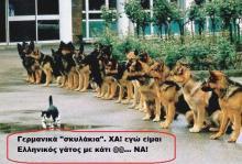 Ο τσαμπουκάς Έλληνα ….γάτου