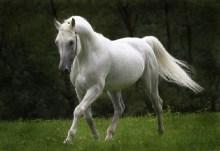 Ο γέροντας και τ΄ άσπρο άλογο….