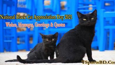 National Black Cat Appreciation Day 2021