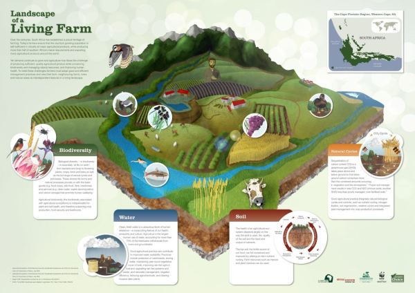 7 Sustainable Agricultural Innovations Toronto