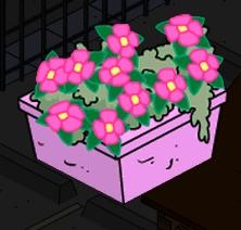 tsto flower planter