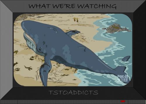 Whale-4-800x573