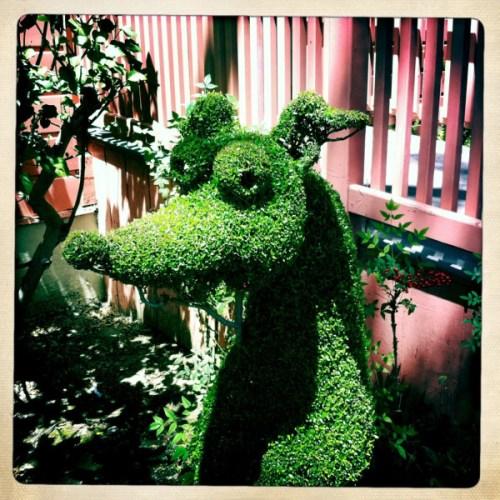 real SLH topiary