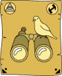 SP bird watching