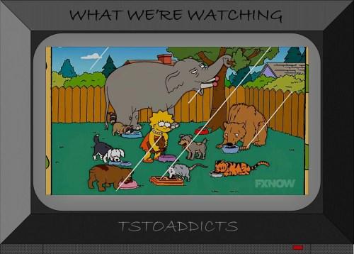 Springfield Animal Shelter Lisa Simpsons Saves Animals