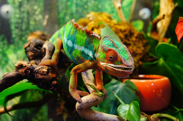"What is the meaning of the statement ""We are like chameleons. We take our hue and the color of our moral character from those who are around us""?"