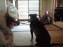 $tsukikoya-CA3A0584.JPG
