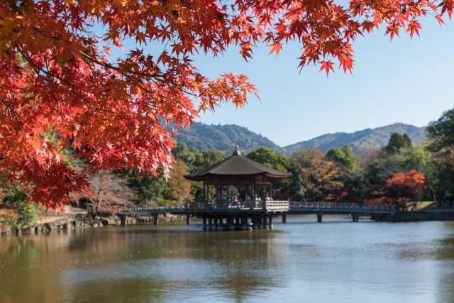 奈良公園の紅葉