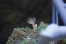 $小さな動物園-ハードチューブのシモフリ