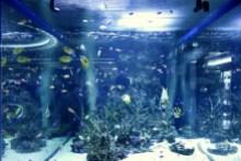$小さな動物園-美ら海