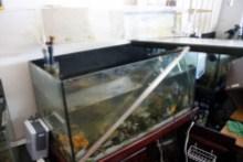 小さな動物園-魚水槽