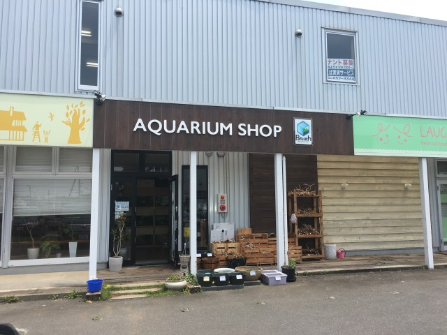 AQUARIUM SHOP Breath