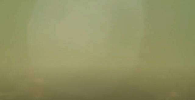 防水デジタルカメラSANYO Xactiで恐る恐る水中撮影テスト クラゲ