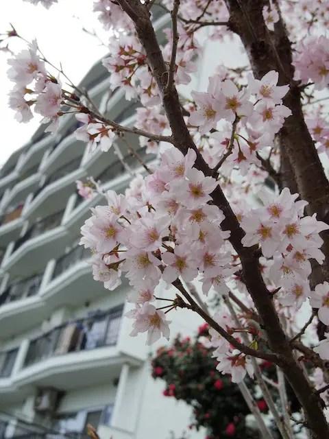 PENTAX Q-S1で撮影桜の花びら