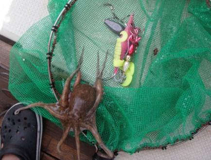 2016年6月27日 釣り船角田 明石タコエギの画像