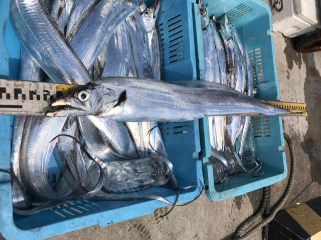 9月3日(日)の釣果(タチウオ船中70匹)