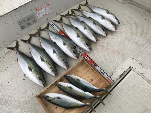 9月22日(金)の釣果(メジロ9匹・ハマチ3匹)
