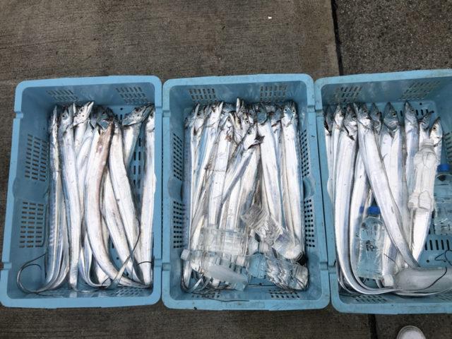 10月16日(月)の釣果(タチウオ船中51匹)