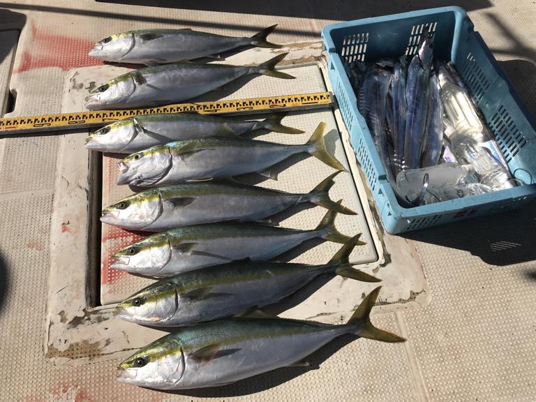 11月24日(土)の釣果(メジロ 8匹・タチウオ26匹)