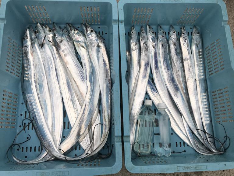 12月20日(木)の釣果(タチウオ船中16匹)