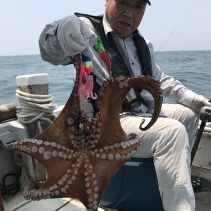 2019-6-22-マダコ2.1kg