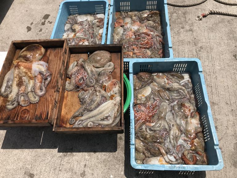 7月7日(日)の釣果(マダコ2.2kg含む船中114杯)