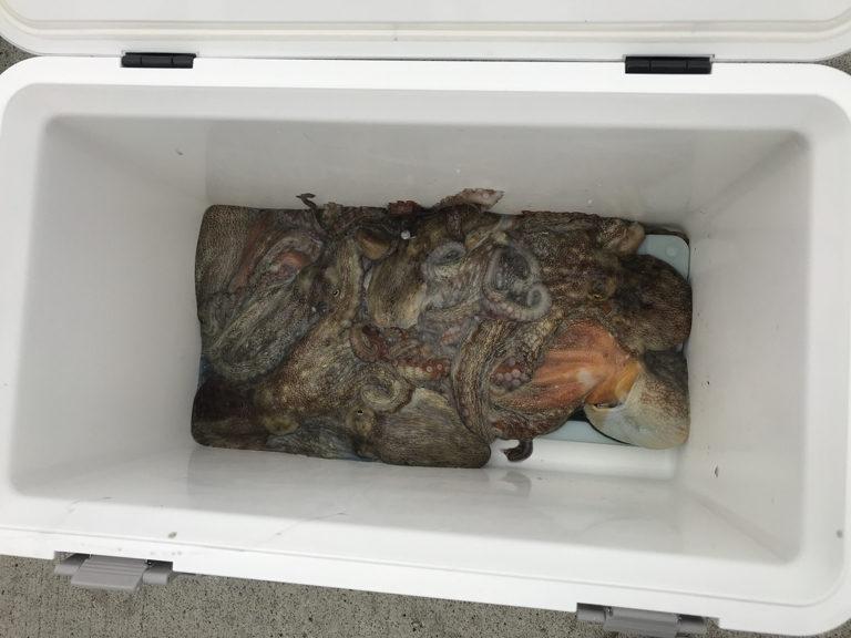 8月24日(土)の釣果(マダコ1.1kg含む船中48杯)