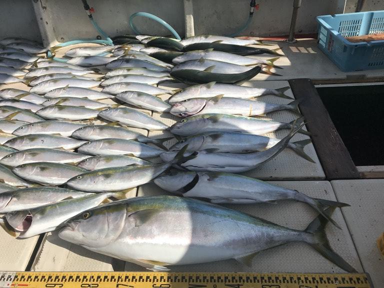 10月31日(木)の釣果(ブリ95cm・メジロ11匹など船中83匹)