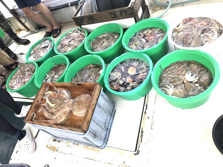 6月26日(金)の釣果(マダコ2.8kg含む船中285杯)