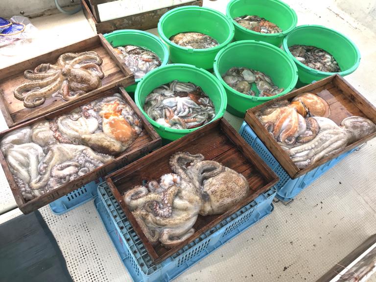 6月29日(月)の釣果(マダコ2.9kg含む船中82杯)