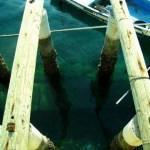 【釣りの基礎知識】釣り竿を落としてしまったらどうするべき?