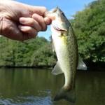 【釣りスポット】バス釣りマニア必見!静岡県の釣りスポット