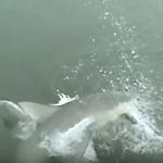 【恐怖の釣り動画】絶対に釣れたら困るモノが釣れてしまった!